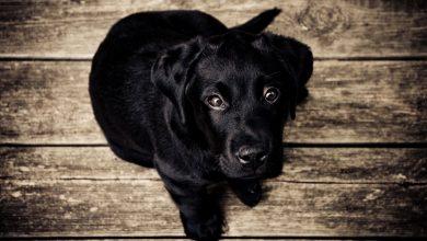 Cómo cuidar a tu cachorro para que crezca sano y feliz